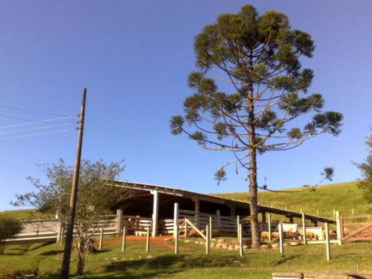 Fazenda Sonhos de Gurí II - Araquari (SC)_800x600